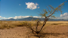 Desert Valley Tree Stock Footage