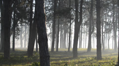 Sun beams pour through trees in foggy forest Stock Footage