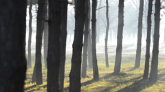 Sun beams pour through trees in foggy forest - stock footage
