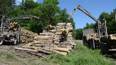 Men load felled tree logs with crane to trailer transportation Stock Footage