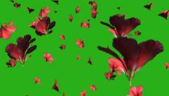 Beautiful flowers rain - green screen Stock Footage
