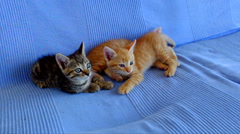 Young kittens playing on a couch Stock Footage