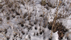 Snow and twigs - stock footage