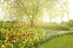 Garden with blossoming   tree and flowers Stock Photos