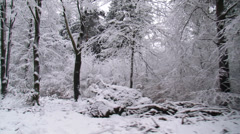 Snowy forest - vehicle shot - Veluwe National Park in The Netherlands Stock Footage