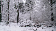 Stock Video Footage of Snowy forest - vehicle shot - Veluwe National Park in The Netherlands