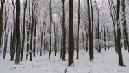 Stock Video Footage of snowy beech forest - vehicle shot