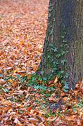 Forest landscape with tree trunk and fallen leaves Stock Photos