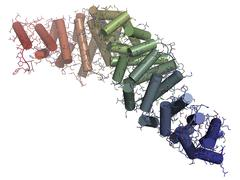 Beta-catenin (armadillo and c-terminal domain) protein. corresponding ctnnb1  Stock Illustration