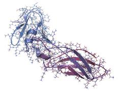Tissue factor (tf, extracellular part) protein. essential in extrinsic pathwa Stock Illustration