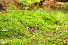 mossy undergrowth in autumn forest - stock photo