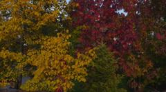 AERIAL: Beautiful Fall Foliage Stock Footage