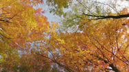 Stock Video Footage of Forest full of bright autumn colors-360 degree rotation
