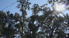 Sun through trees - stock footage