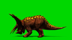 Triceratops dinosaur eat - isloatet green screen footage Stock Footage