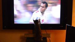 Kitten at TV watching football match soccer match Stock Footage