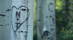 Heart Love Tree Carving Woods Forest Stock Footage