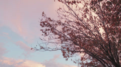 tilt to fall colors - stock footage