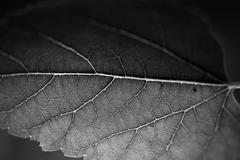 Leaf in macro photography Stock Photos