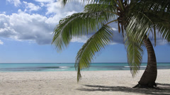 palm on the beach - stock footage