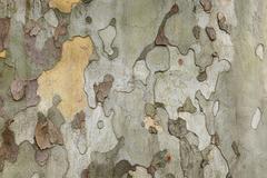 tree bark close up - stock photo
