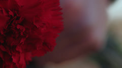 Red Flower in Winter Stock Footage