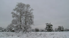 Snowy heath landscape + pine trees, grey sky - pan Stock Footage
