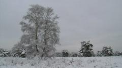Snowy heath landscape + pine trees, grey sky - pan Stock Footage