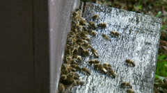 Honey bees flying in and out beehive Stock Footage