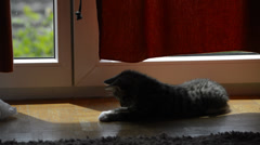 Kitten playing with shadow Stock Footage