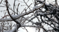Ice Tree Rack Focus Time Lapse Stock Footage