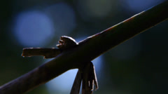 Tree branch Stock Footage
