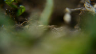 Stock Video Footage of Ant`s hole (Macro)