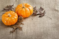 Mini pumpkins. Stock Photos