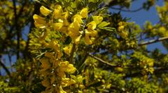 Patagonian flowers in spring - Punta Arenas II Stock Footage