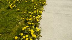Patagonian flowers in spring - Punta Arenas III Stock Footage