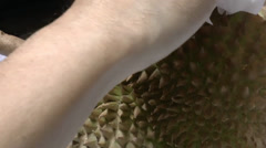 Close-up view of opening up a durian. (OPEN A DURIAN--6) Stock Footage