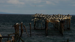 Abandoned Pier in Punta Arenas - Strait of Magellan VI Stock Footage