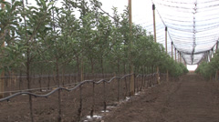 Orchard irrigation and protection system Stock Footage