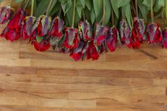 red parrot tulips on wooden table - stock photo
