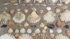 sea-shell decoration on sandy beach - stock footage