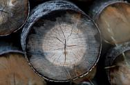 Stock Photo of background of tree rings