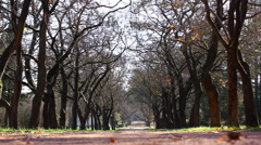 Alley road in park Stock Footage