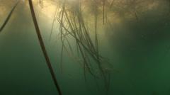 Long algae in Black sea Stock Footage