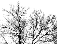 bare branches of a tree on a white background - stock photo