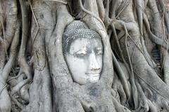 buddha's head is embedded in tree roots - stock photo