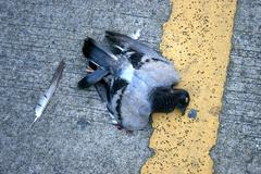 dead bird on the road - stock photo