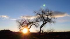 Stock Video Footage of Cottonwood Tree Sunrise