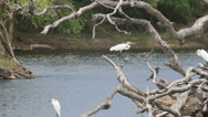 Stock Video Footage of Heron