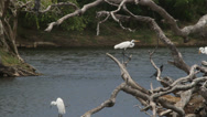 Stock Video Footage of Water bird_three herons